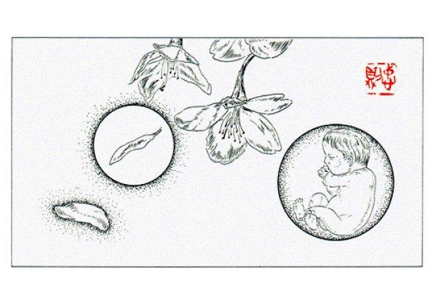 画像1: ポストカード Fantasy Flowers  Nimbus (4)  胎児 (1)